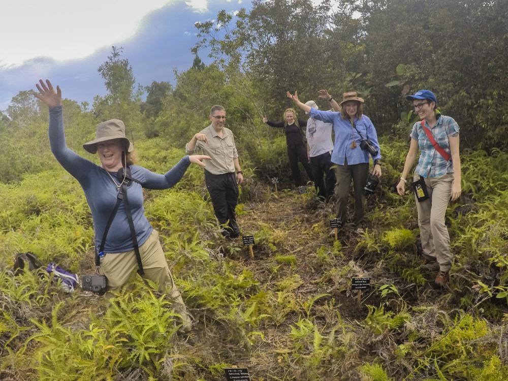 Tree replanting Borneo