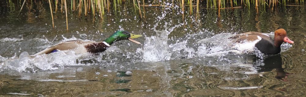 Bird photography Sussex