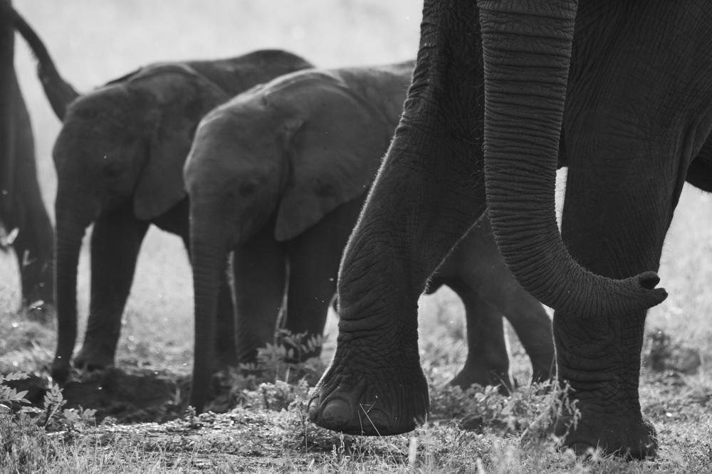 elephant Queen Elizabeth Uganda
