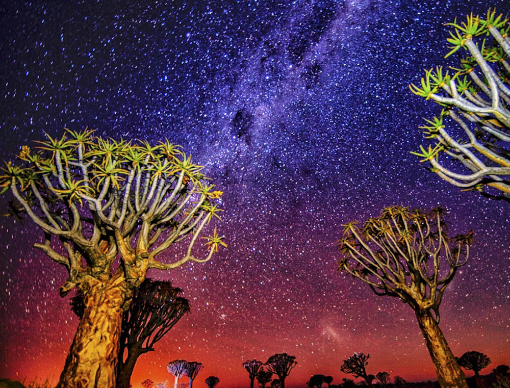 Quiver tree forest Namibia pictures