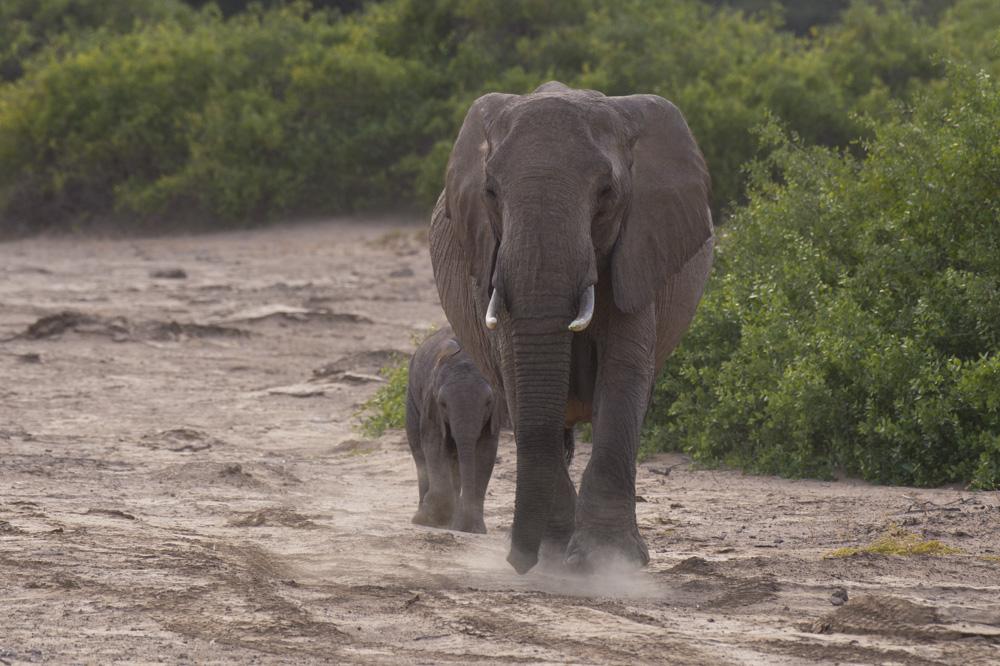 desert elephants namibia