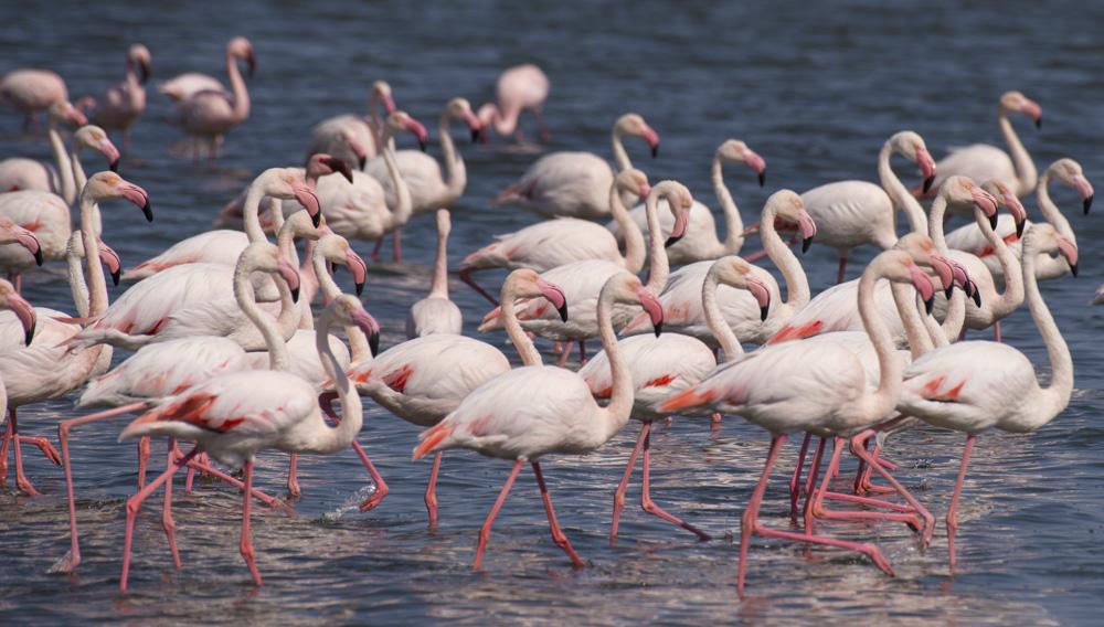 Flamingo namibia