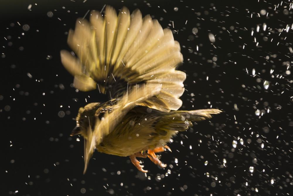 Nikon 500mm pf lens wildlife photography