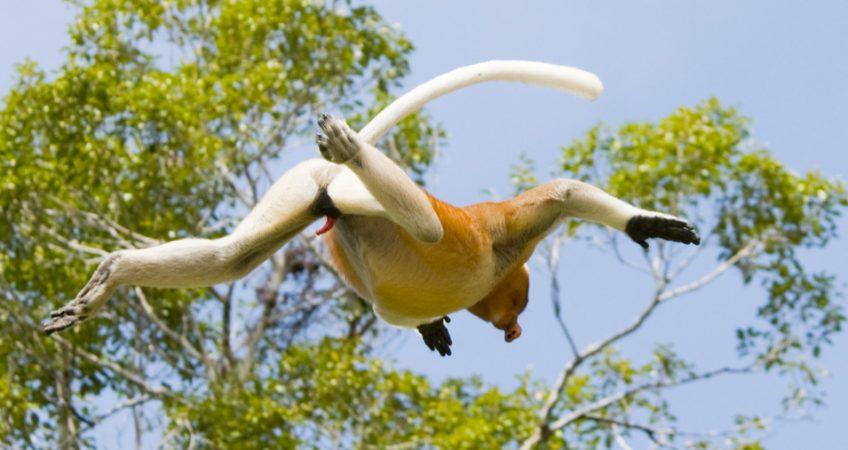 wildlife nature photography