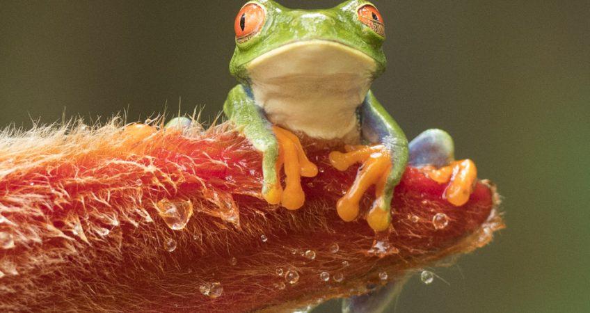 Frog Refugio de Vida Silvestre Los Guatuzos