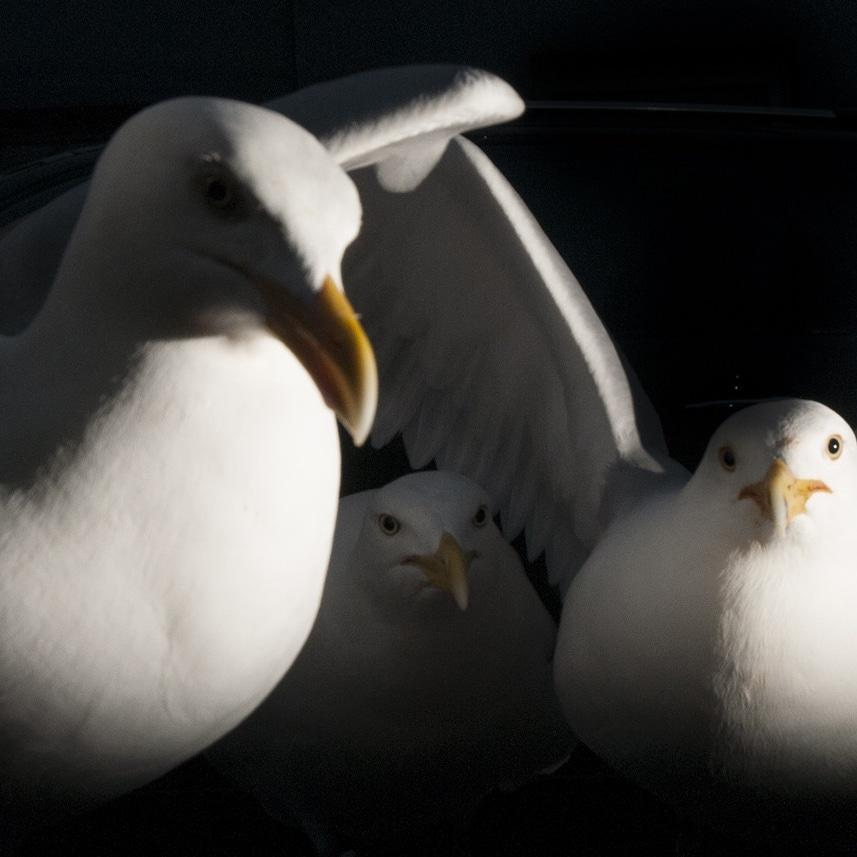 wildlife photograpjhy Sussex