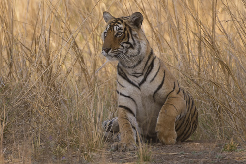 wildlife photography holidays tigers