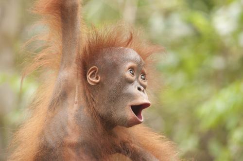 wildlife photography holiday orangutans