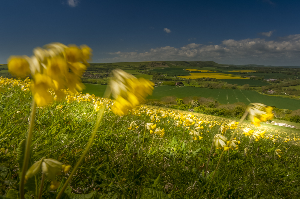 Sussex Downs landscape photograpjy