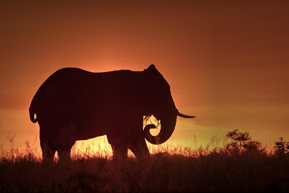 Tanzania photogarphy tour elephant sunrise
