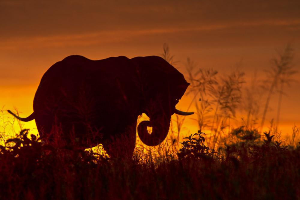 Tanzania photography tour elephant