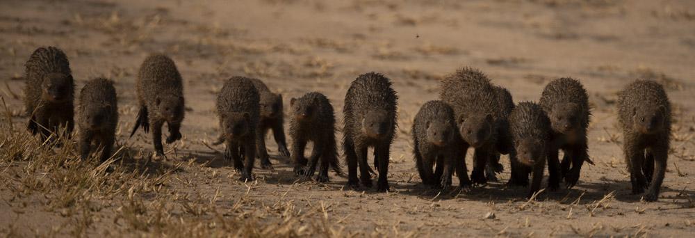 Tanzania photogarphy tour mongoose