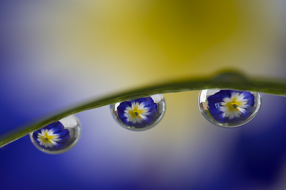 water drop refraction photography