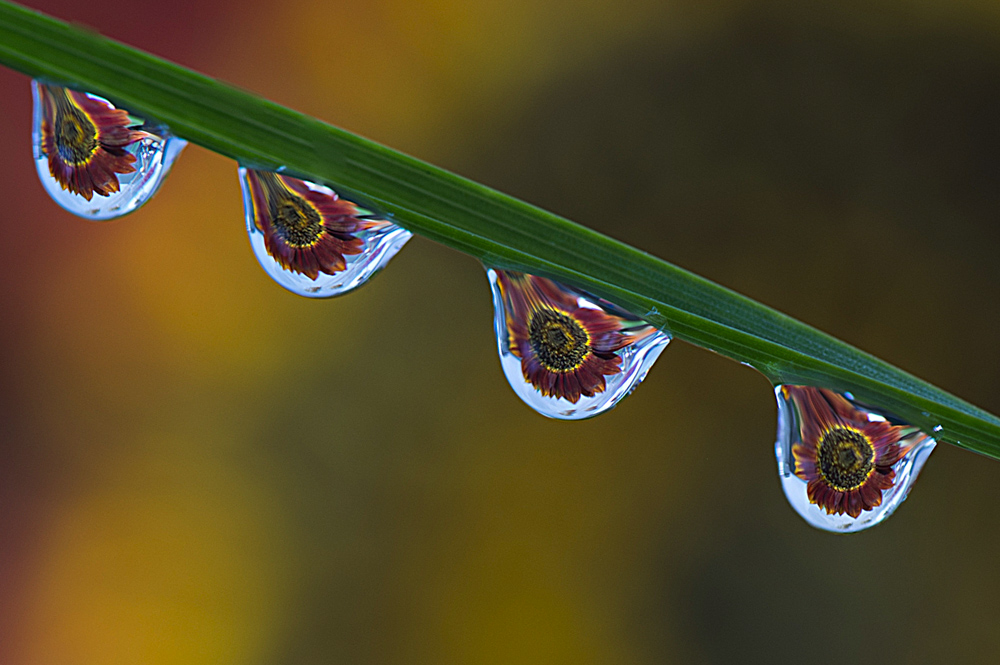 water drop refraction photography workshop