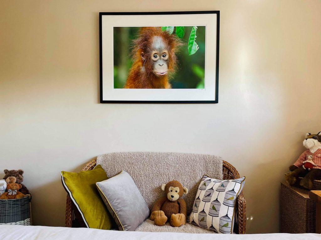 orangutan print baby