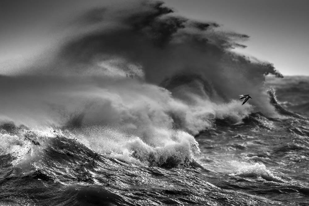 Freedom wave photo