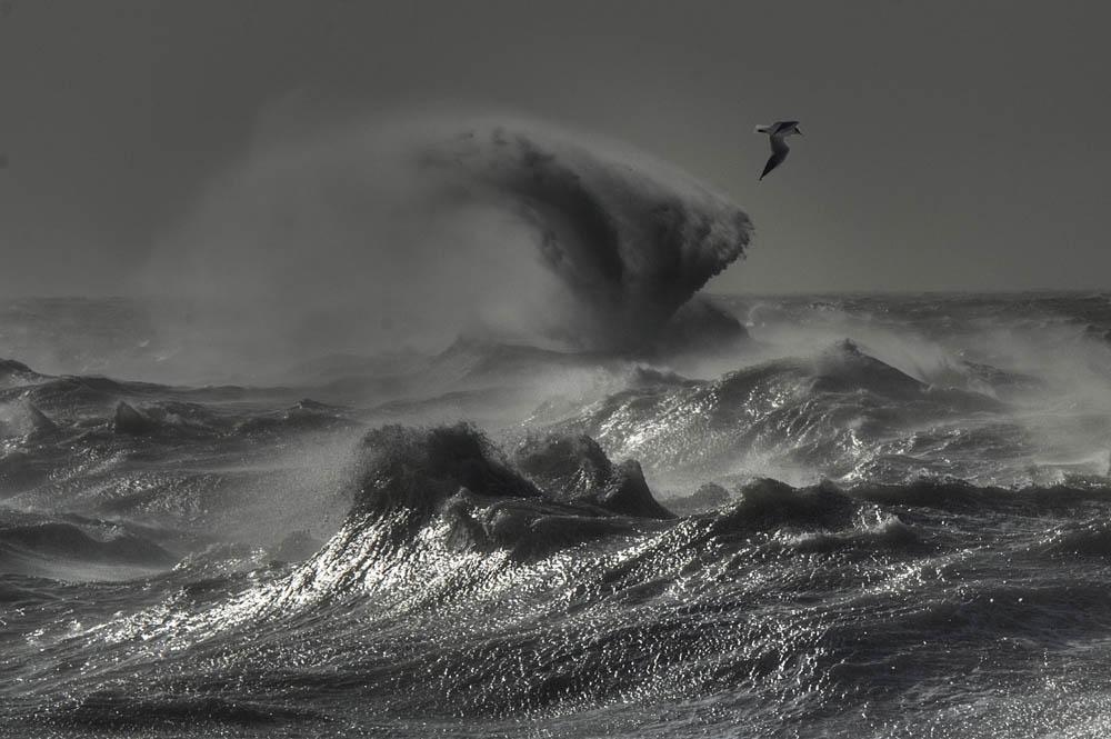waves prints