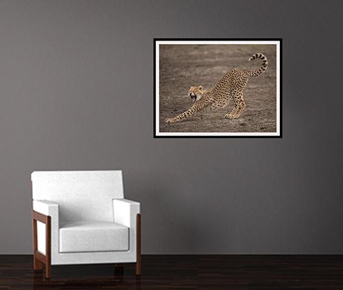 Cheetah limited edition print