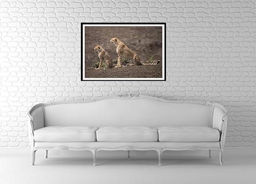 Cheetah photo framed