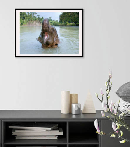 fine art elephant print