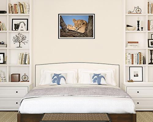 Lion asleep artwork