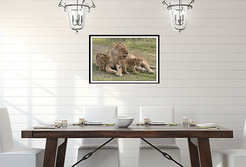 Lion cubs limited edition print