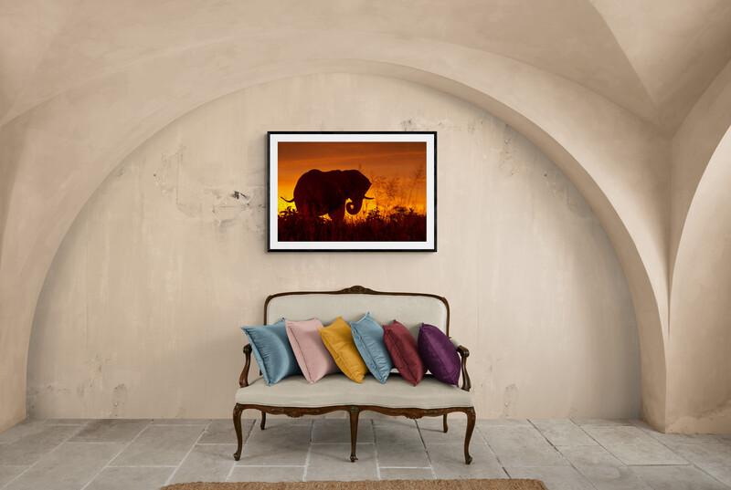 Born Free Elephant Print