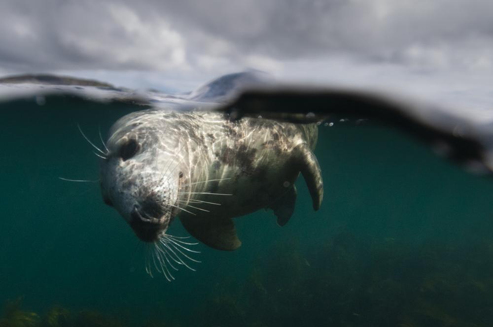 Common seal England