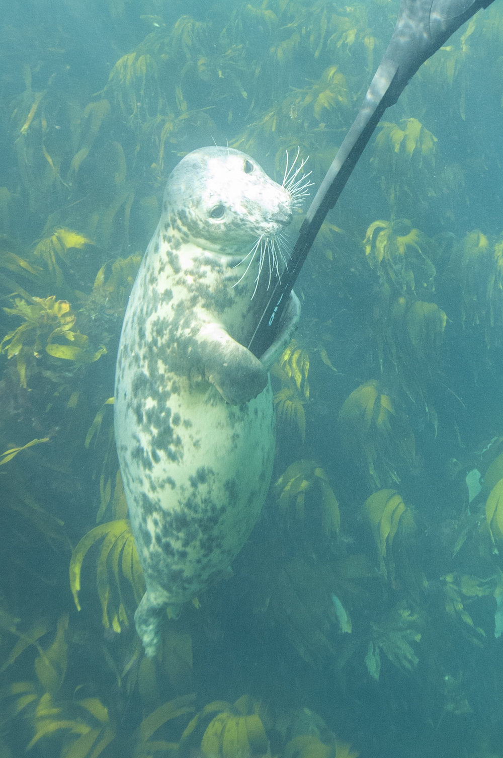Seal fins