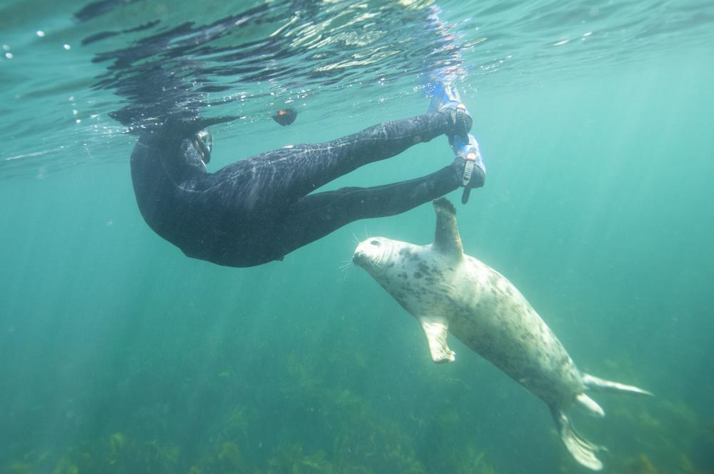 Seal touching fins